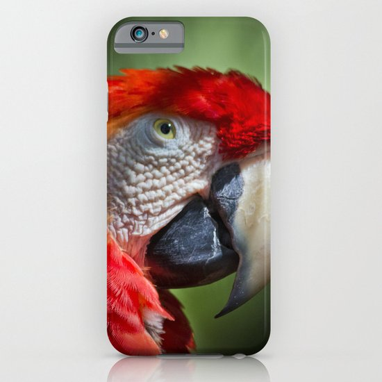 Scarlet Macaw iPhone & iPod Case