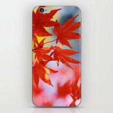 Vibrant Fall iPhone & iPod Skin
