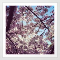 Cherry Blossoms - Washin… Art Print