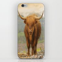 Highland Moo iPhone & iPod Skin