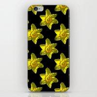 Daffodil On Black iPhone & iPod Skin