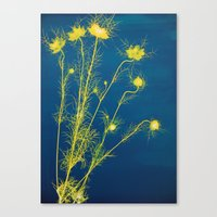 Photogram - Love in the Mist II Canvas Print