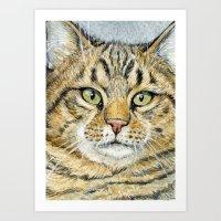Tabby Cat 248 Art Print