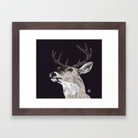 Deer (remindeer) Framed Art Print