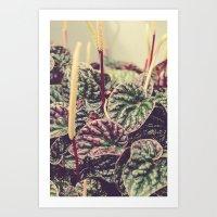 Heart Shaped Leaves Art Print