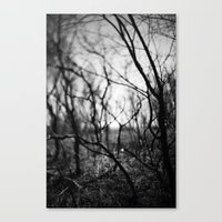 Amongst The Shadows. Canvas Print