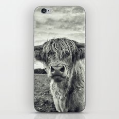 Highland Cow II iPhone & iPod Skin
