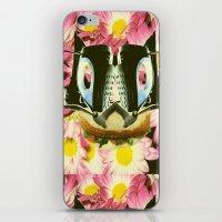 Cat Sandwich iPhone & iPod Skin