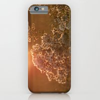 flowers at sunset iPhone 6 Slim Case