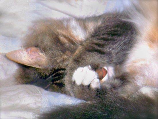 My Cat Actually Sleeps This Way Art Print