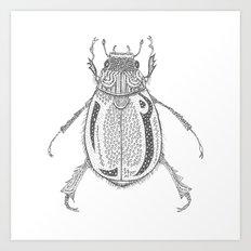 Coleoptera Art Print