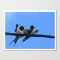 Sullu (swallows) Canvas Print