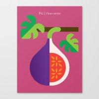 Fruit: Fig Canvas Print