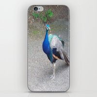 Peacock Suit iPhone & iPod Skin