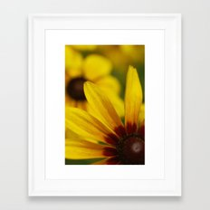Brown Eyed Susan Framed Art Print