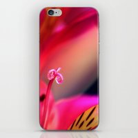 Myriad of Colours iPhone & iPod Skin