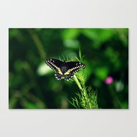 It's Been a Bad Day Canvas Print