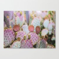 Cotton Candy Cacti Canvas Print