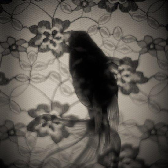 金魚と花 Art Print