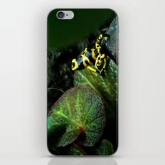 Leucomelas Poison Dart Frog iPhone & iPod Skin