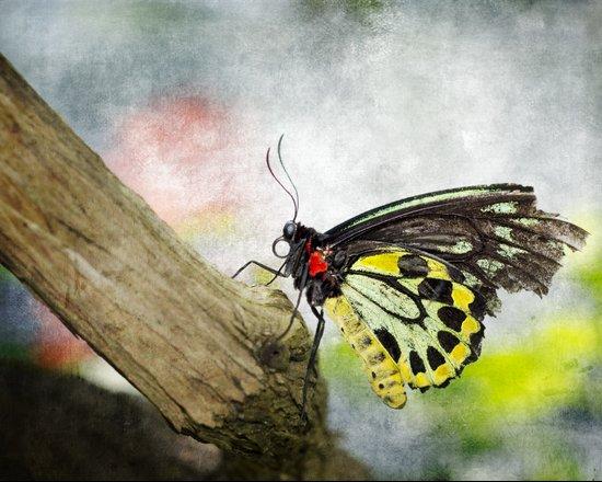 The Stillness of a Butterfly Art Print