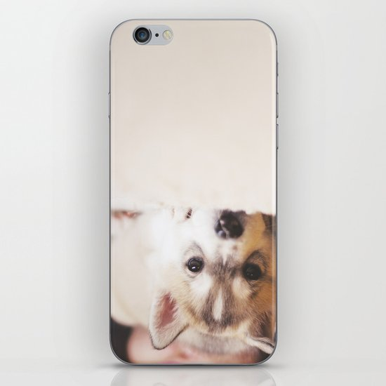 "siberian husky puppy - ""nova"" iPhone & iPod Skin"