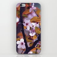 Cherry Blossom 2 iPhone & iPod Skin