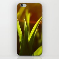 Rays iPhone & iPod Skin