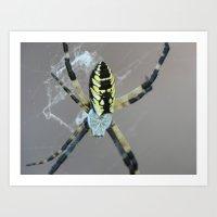 Garden Spider 2015 XIV Art Print