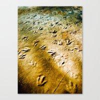 Eubrontes Giganteus Canvas Print