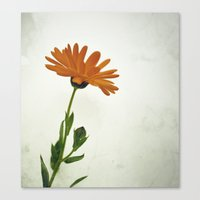 Bee magnet Canvas Print