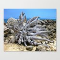 Bermuda  Driftwood Canvas Print