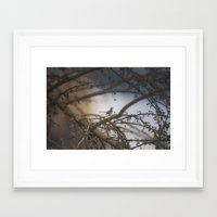 Sparrow In The Bramble Framed Art Print