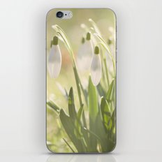 Spring Is Ringing  iPhone & iPod Skin