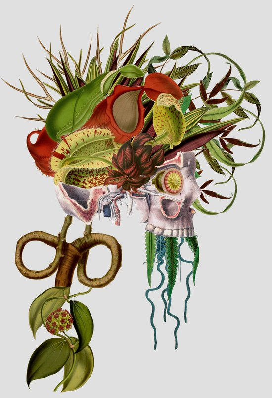 death's head plant anatomical collage art by bedelgeuse Art Print