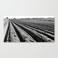 Homeland (b/w) Canvas Print