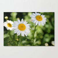 Three Lovely Ladies Canvas Print