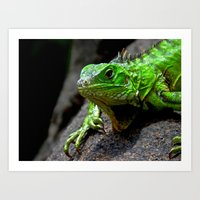 The Lizard King Of Aruba Art Print