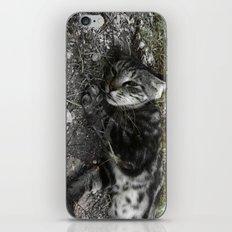 Wild cat iPhone & iPod Skin