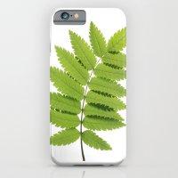 Green Rowan Leaf  iPhone 6 Slim Case