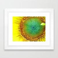 Sunflower from Seed Framed Art Print