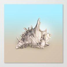 Shell 2 Canvas Print
