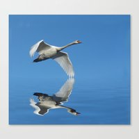Reflections Of A Swan Canvas Print
