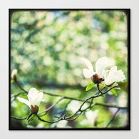 Magnolia En Fleurs Canvas Print