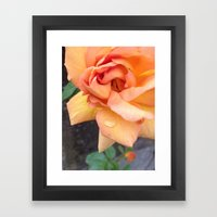 Orange Rose Framed Art Print