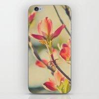 Vintage Red Dogwood Tree… iPhone & iPod Skin