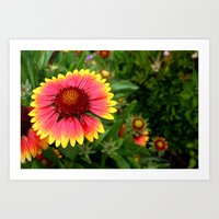 Summer Colours Art Print