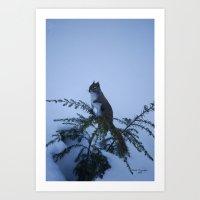 Winter Squirel Art Print