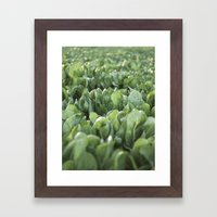 Green Textures - Food - Vegetables Framed Art Print