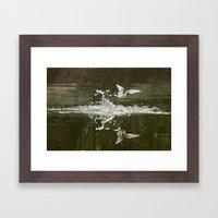 Little tern Framed Art Print